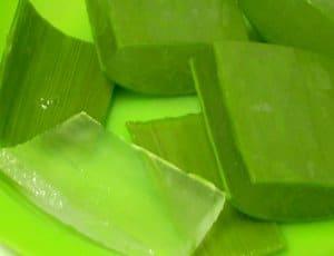 Aloe Vera plant benefits