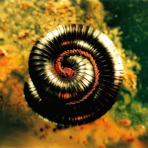 Closer to God, Nine Inch Nails