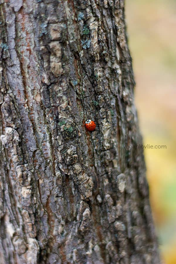 Living in the present moment, ladybug on tree trunk